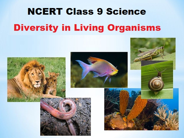 NCERT Class 9 Science Book Chapter 7 Diversity in Living Organisms v