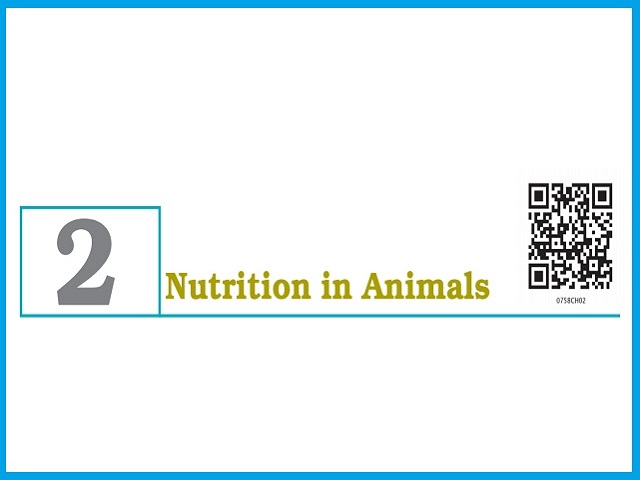Nutrition in Animals - Chapter 2: Class 7 Science NCERT Book
