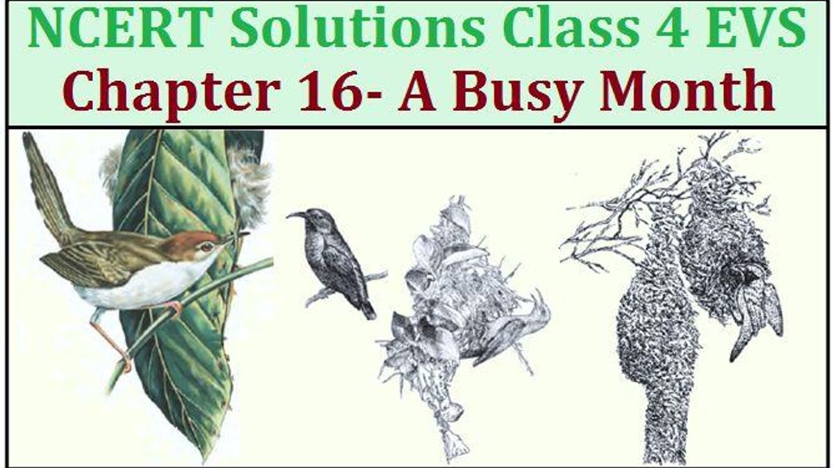 NCERT Solutions for Class 4 EVS Chapter 16: A Busy Month