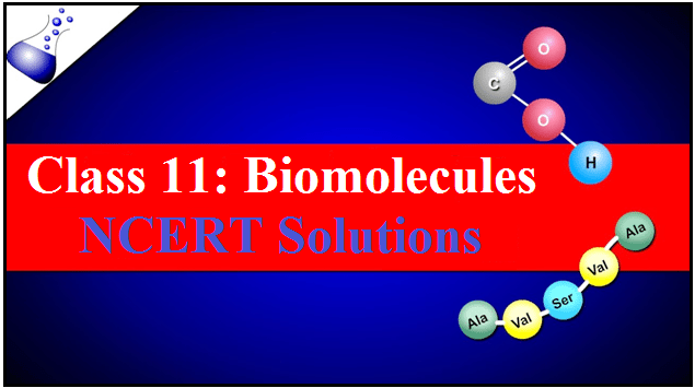 Biomolecules: NCERT Solutions