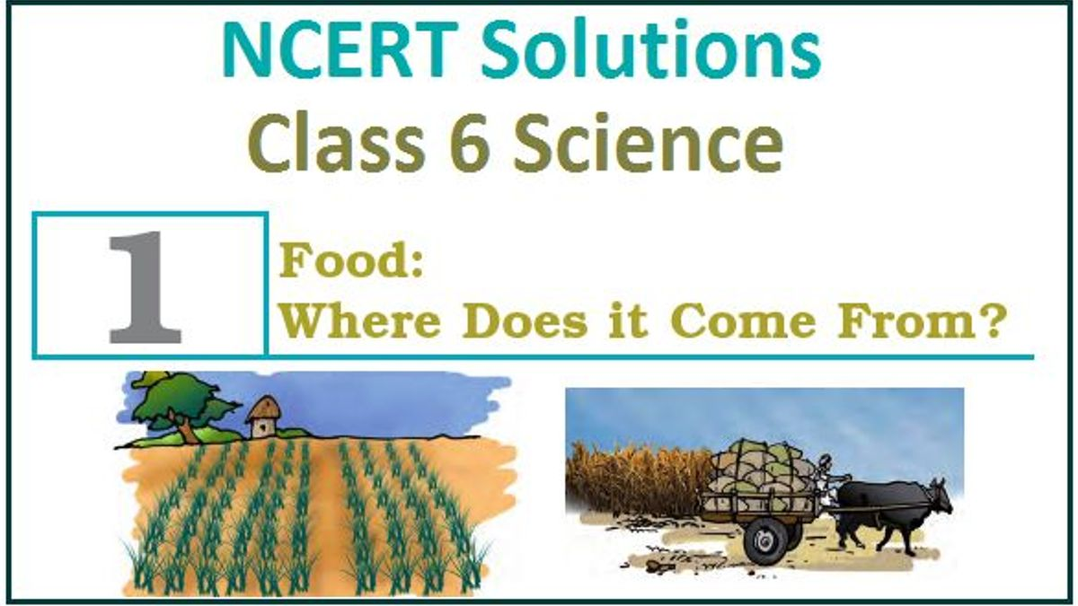 NCERT Solution for Class 6 Science Chapter 1