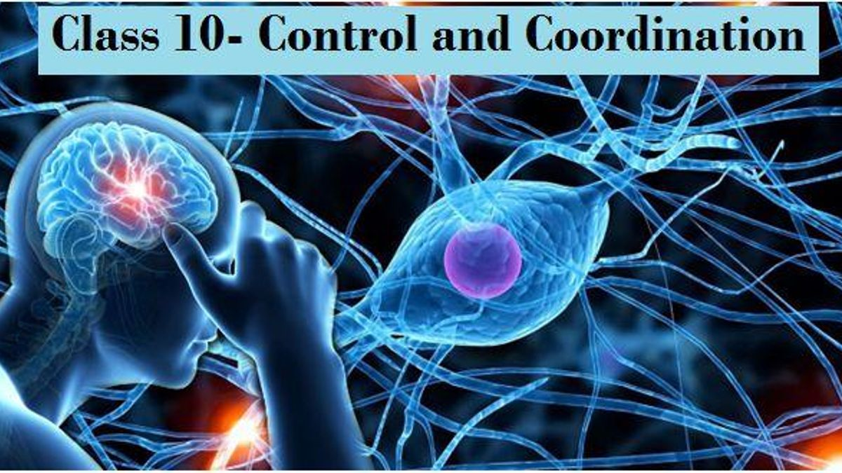 Control and Coordination: NCERT Solutions