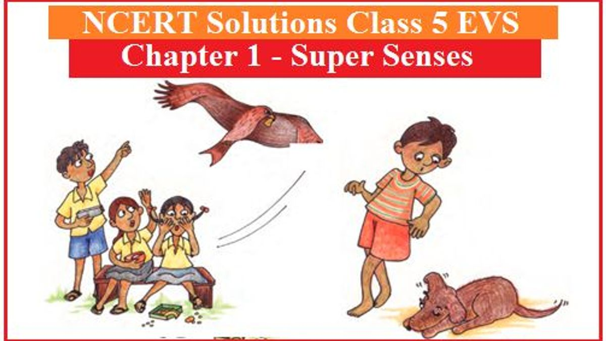 NCERT Solutions Class 5 EVS Chapter 1