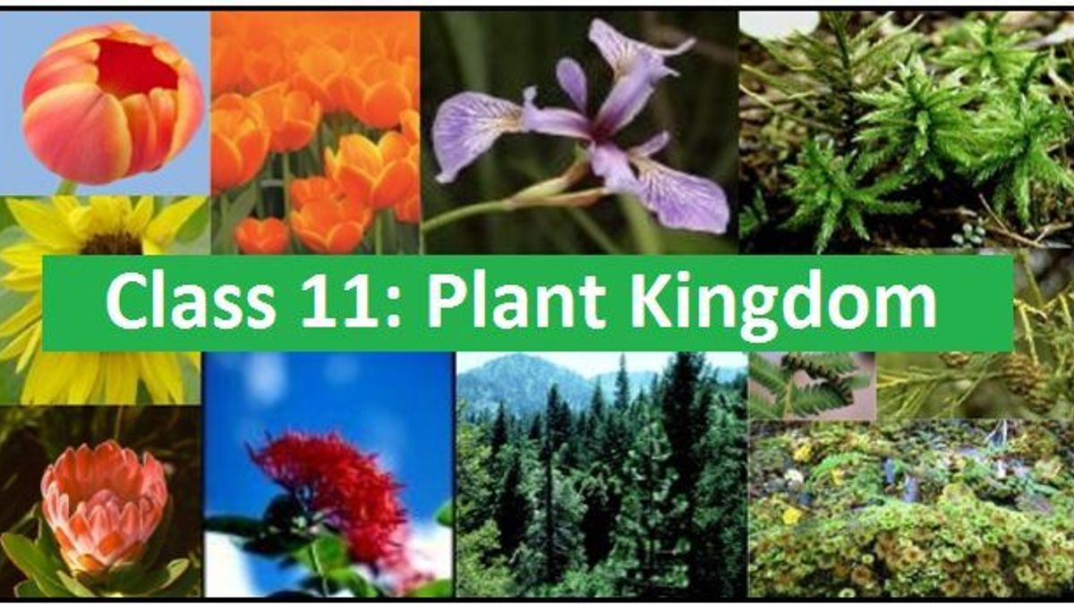 Plant Kingdom: NCERT Solutions