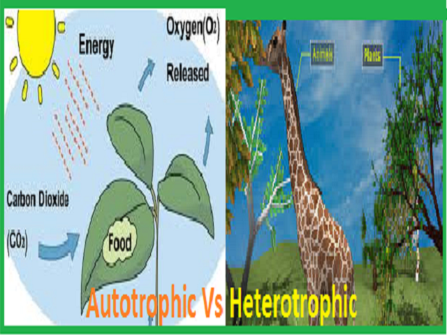 Difference between Autotrophic and Heterotrophic modes of nutrition