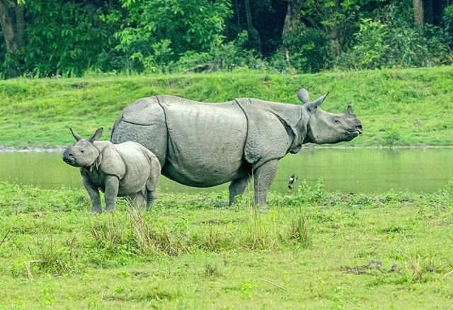 Kaziranga becomes India's first National Park with satellite phones worth Rs. 16 lakh