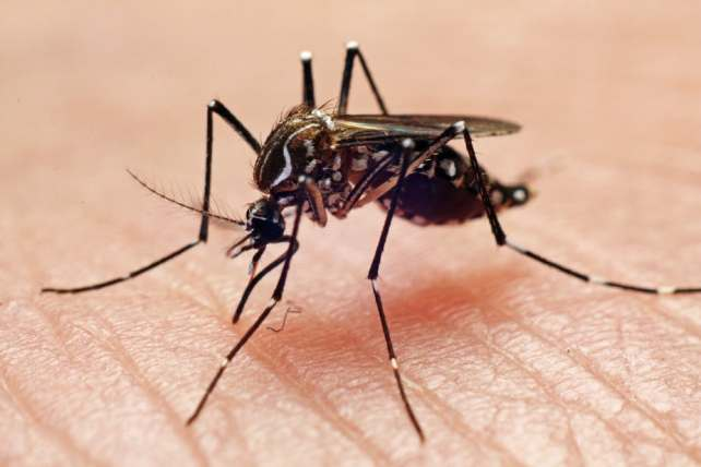 World Mosquito Day 2021: History, Significance and How to Prevent Malaria