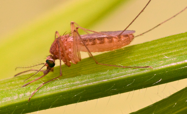 What is West Nile Virus? Russia warns of increase in cases; know symptoms, treatment, origin of WNV
