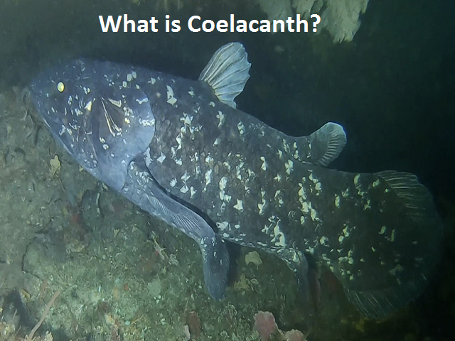 What is Coelacanth?