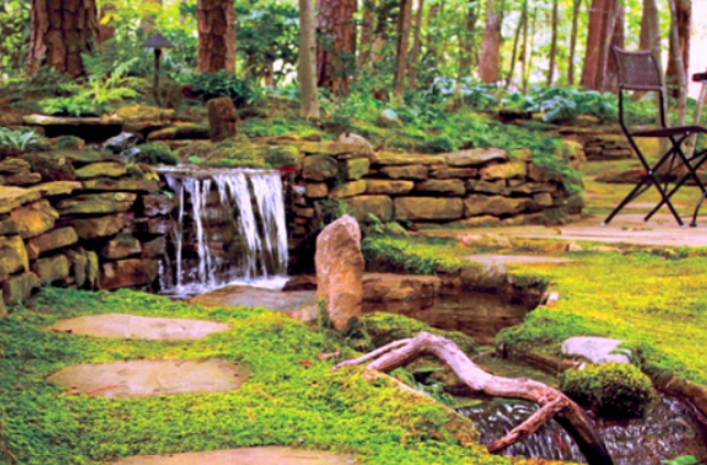 India's first cryptogamic garden opens in Dehradun, Uttarakhand