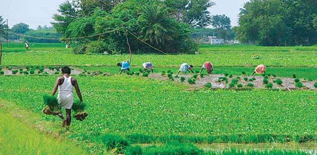 Government launches 'Atmanirbhar Krishi app' for farmers