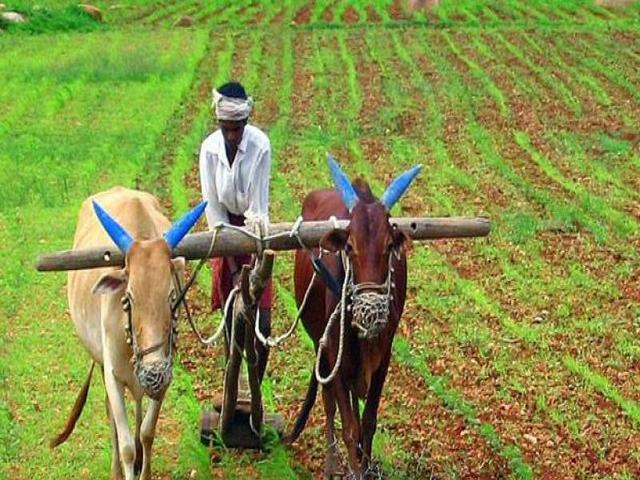 Farmer, Source: PTI