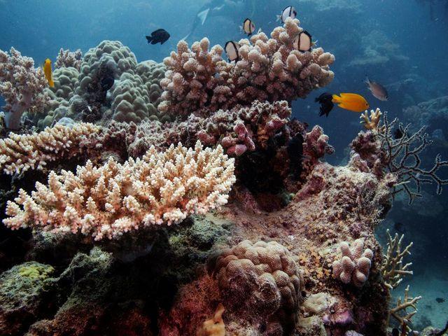 Great Barrier Reef, Source: Reuters