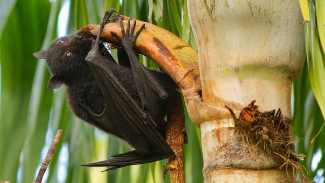 Nipah Virus in India: Symptoms, Causes, Treatment and Prevention