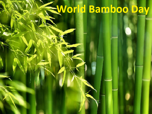 World Bamboo Day 2021: History, Significance, Quotes, and Key Facts