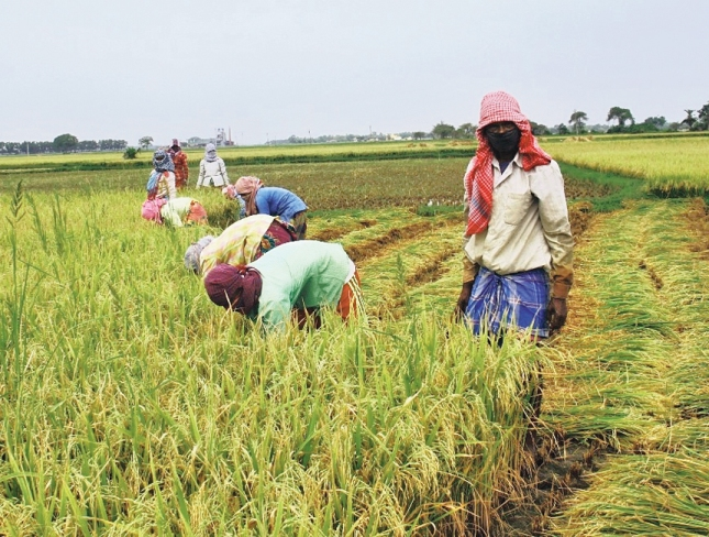 Government plans 12-digit unique ID for farmers