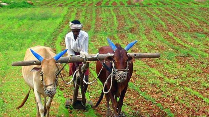 Indian farmer, Source: PTI