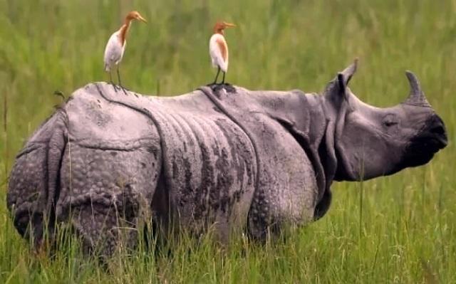 World Rhino Day 2021: Assam to burn 2,479 Rhino Horns