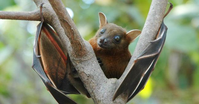 Nipah Back to Haunt Kerala as 12-Yr-Old Succumbs to Virus Symptoms, Treatment & All You Must Know