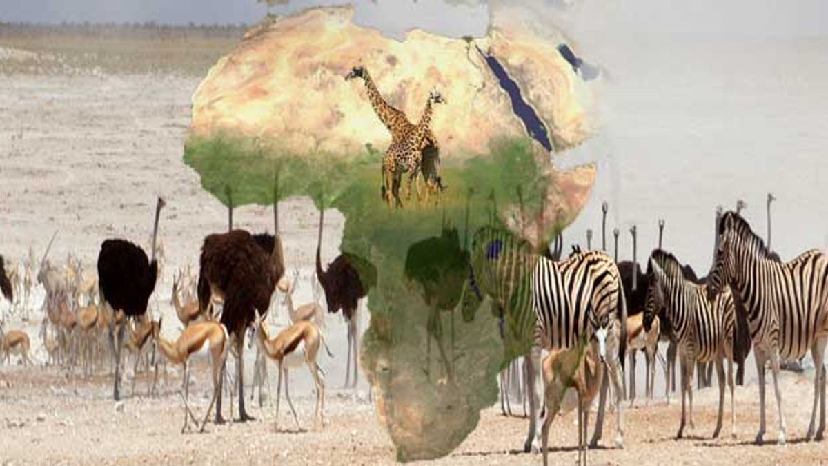 GK Questions and Answers on the Geography of Africa