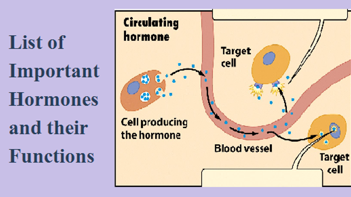 List of important hormones and their functions