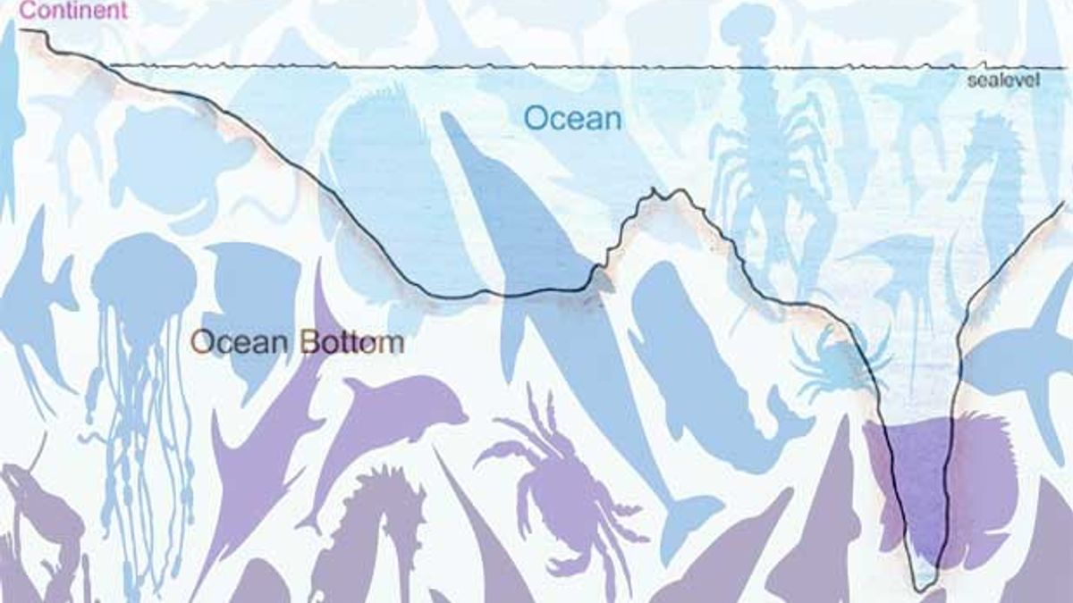 Oceanic Topography: Typology and Significance