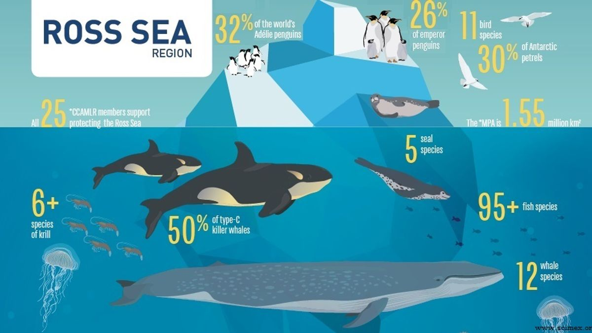 10 Ecological facts about the World's largest marine protected area