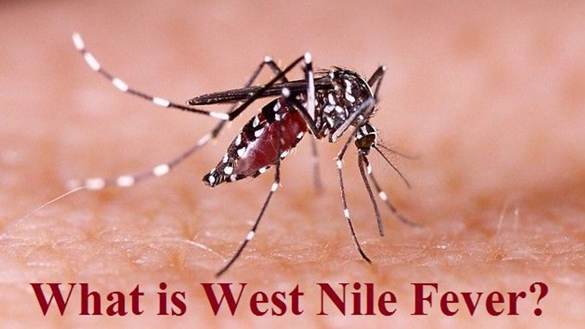 What is West Nile Fever?