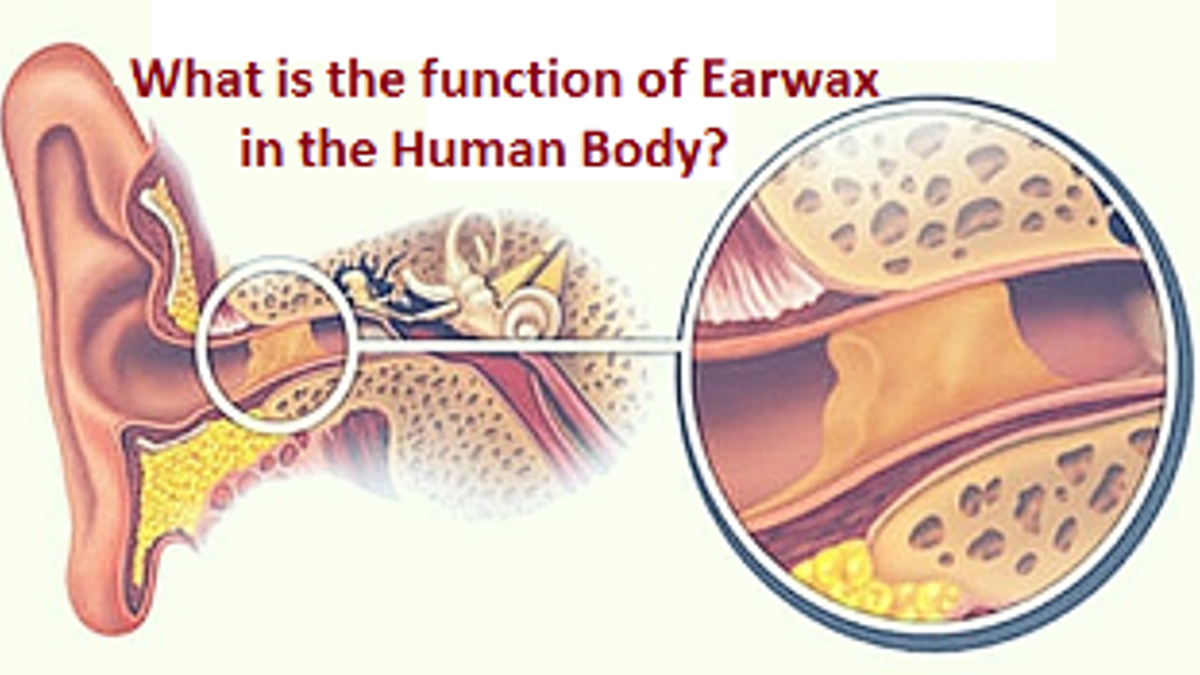 Why do we have Earwax and what is its function?