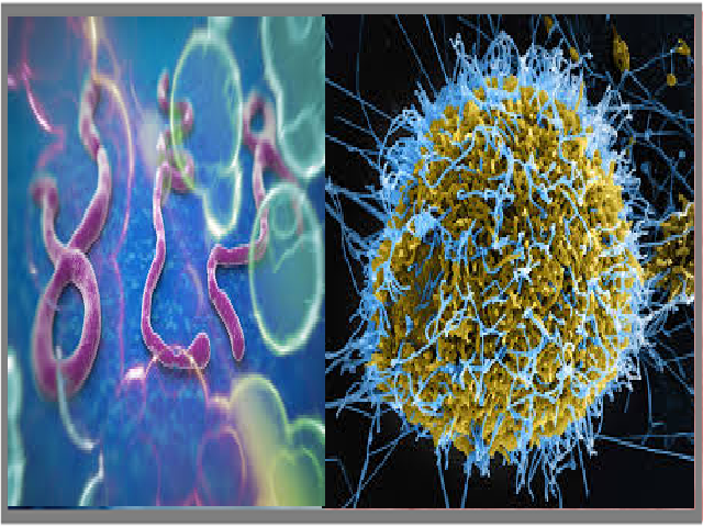 Important facts about Ebola Virus