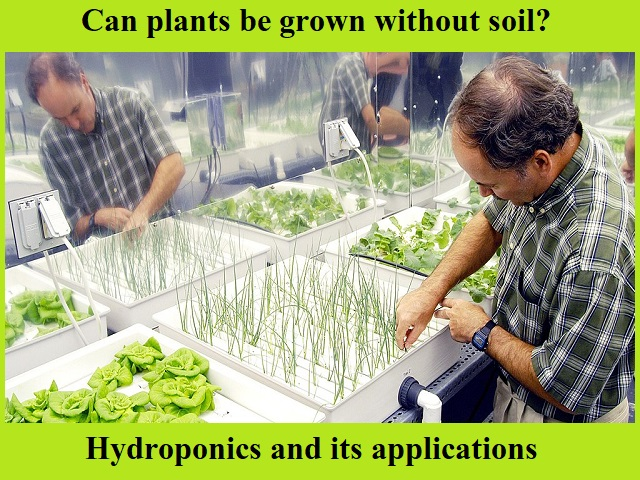 NASA researcher checking hydroponic onions, Bibb lettuces, and radishes | Credit: Wikipedia
