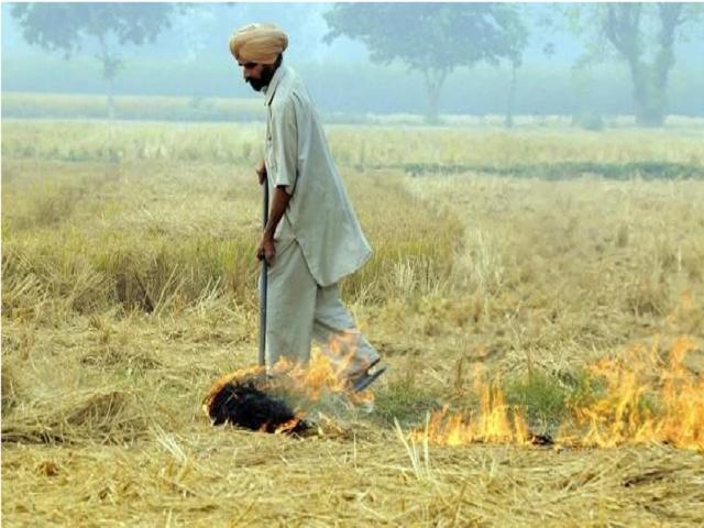 Parali Burning in Punjab