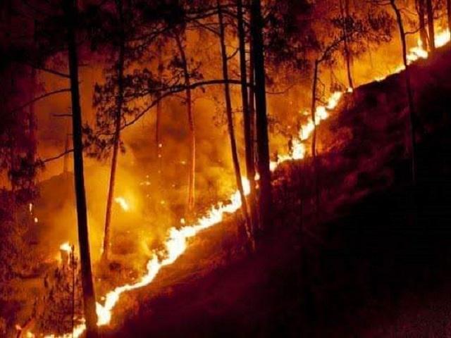 Uttarakhand Forest Fire: Uttarakhand burning since 4 days, nearly 50 acres  of land destroyed?