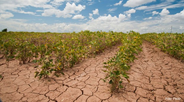 India at risk of food shortage due to climate change: Study